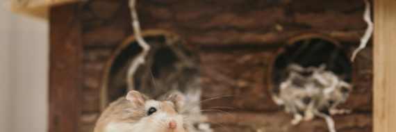 macro-photography-of-mouse-near-brown-wooden-cage-3362697
